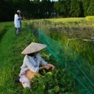 TPP妥結で日本の農地は海外企業のものになる
